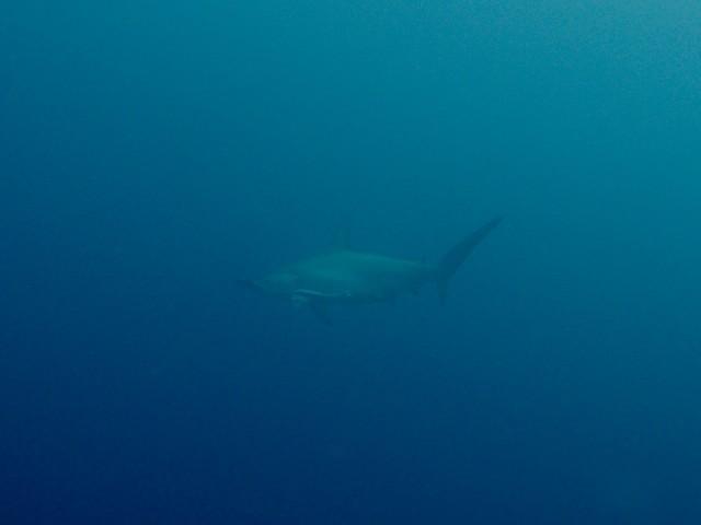 サメ狙いで!