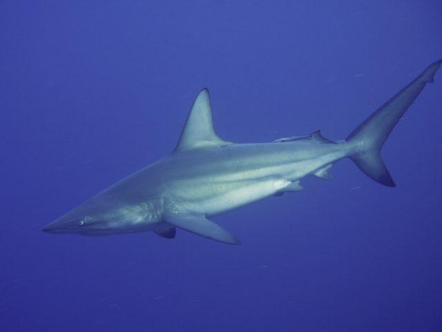 サメな1日!